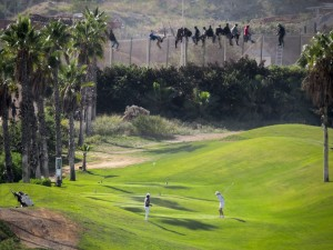 golfasiel